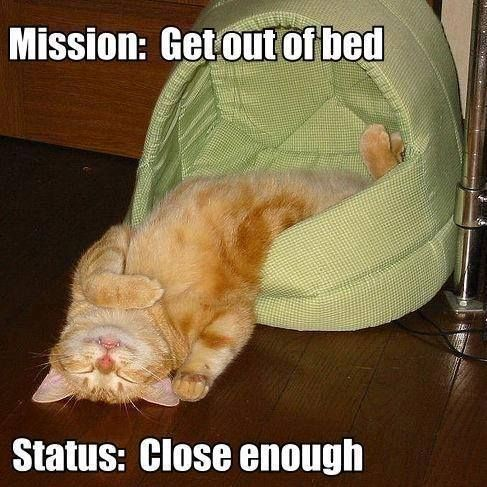 Funny kittens, cat humour. For the funniest cats pics and also quotes take a look at www.funnyjoke.lol