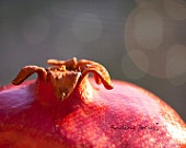 Fruit Photography, Burgundy Red Pomegranate Close-up Still Life, Warm Autumn Rustic Kitchen Wall Hanging Food Fine Art Photo 8x10 Home Decor
