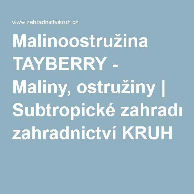 Malinoostružina TAYBERRY - Maliny, ostružiny | Subtropické zahradnictví KRUH