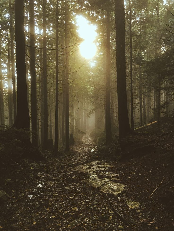 Foggy trail near vancouver 1536x2048 oc landscape - 1536x2048 ipad ...