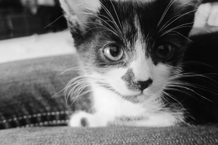 Our kitty <3