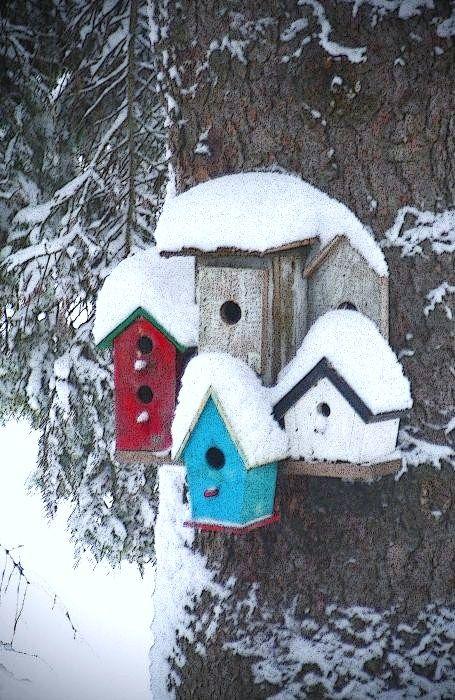 vogelhuisjes in de sneeuw