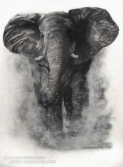 drawing of an elephant | Art from Deviantart | Pinterest