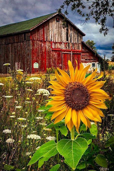uśmiech wiosny :-)  www.KuferArt.pl