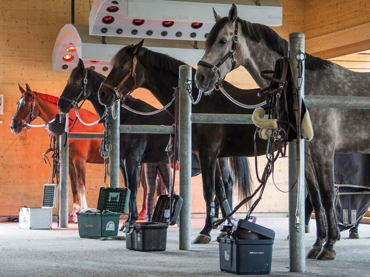 i just like the idea of doing all my horses at one time, pressure washer!!