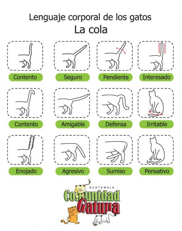 Lenguaje corporal de los gatos | Guate Sostenible