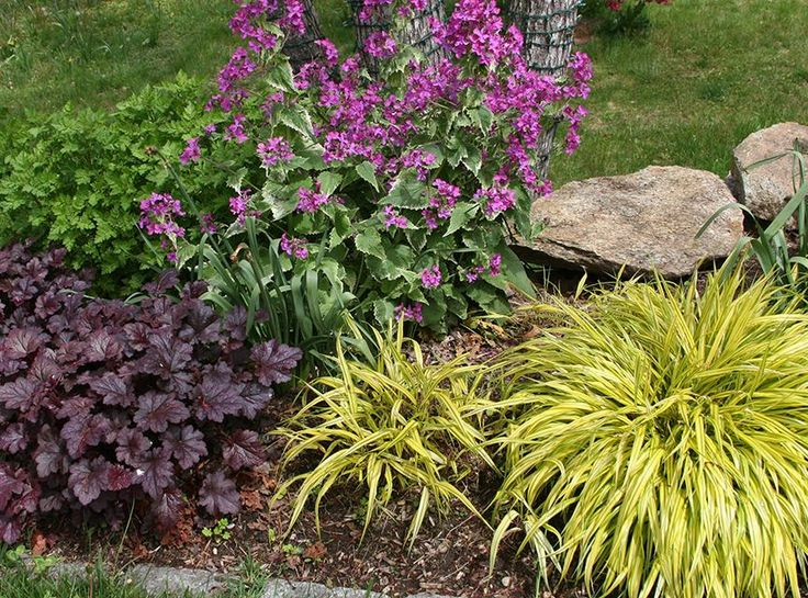 Plants and flowers hakon grass spring and the beautiful for Flower garden design zone 6