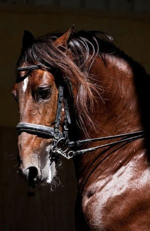 Stunning <b>horse</b>!! #<b>horses</b> #animals #nature #photography by louellaa