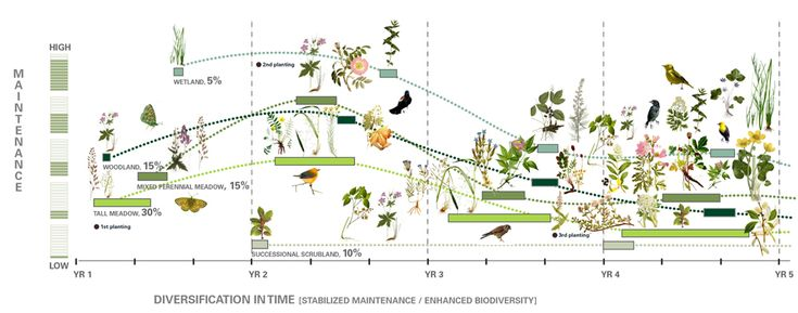 """Designing the High Line."" Diversity and evolution in plant and bird life over time. So cool!"