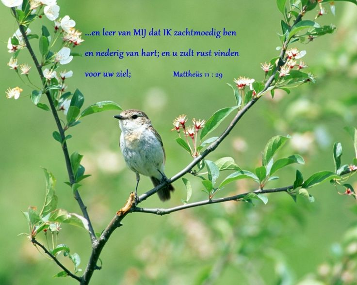 ... en leer van Mij dat Ik zachtmoedig ben en nederig van hart, en u zult rust vinden voor uw ziel; Mattheüs 11:29
