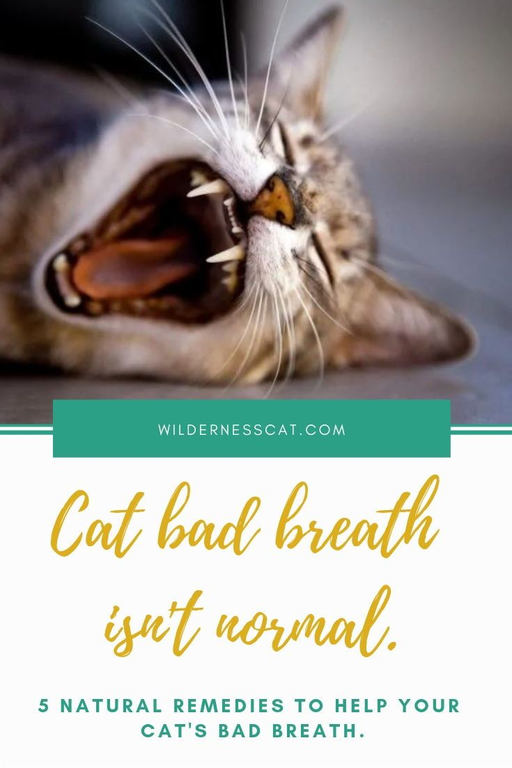 Cat Bad Breath Causes And Natural Remedies For Bad Breath In Cats Wildernesscat Cat Bad Breath Bad Breath Remedy Bad Breath