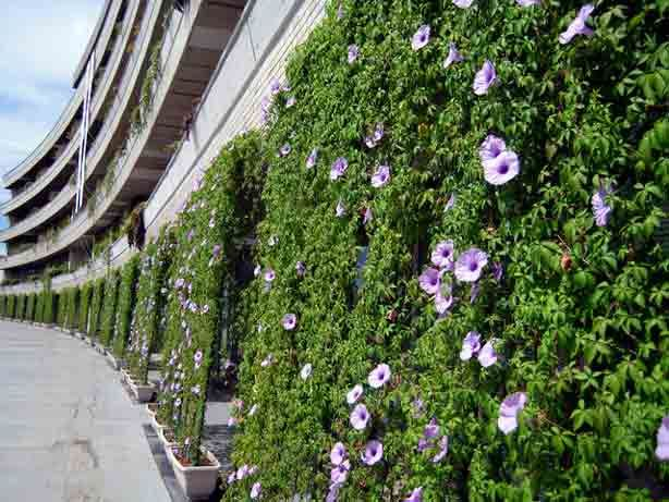 How to Grow an Energy-Saving Living Curtain   Urban Gardens   Unlimited Thinking For Limited Spaces   Urban Gardens