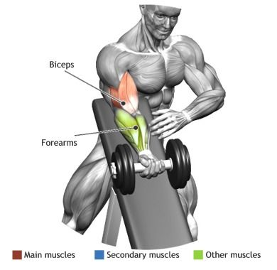 BICEPS - STANDING ONE ARM DUMBBELL CURL OVER INCLINE BENCH                                                                                                                                                      Plus