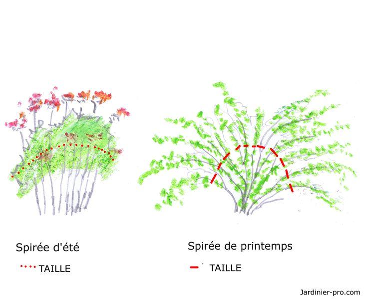 Les 59 meilleures images propos de jardin sur pinterest jardins planters et nantes - Comment tailler la menthe ...