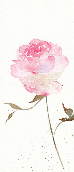 Pink rose watercolour watercolor painting