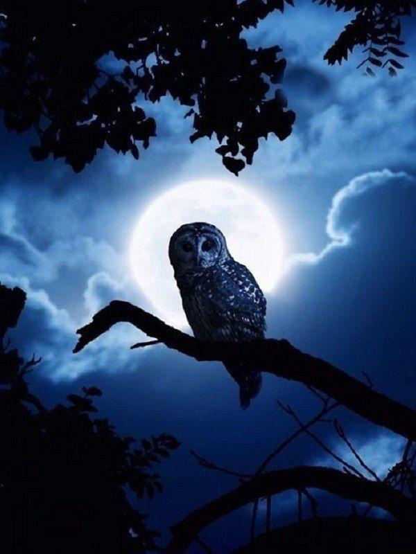 как сжигаю картинки птица ночь чувака мудренное родословной