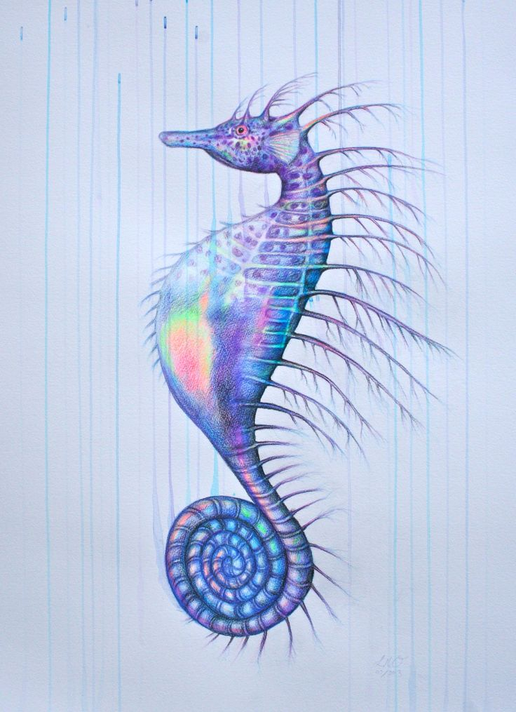 seahorse research paper Explore the latest articles, projects, and questions and answers in seahorse assay, and find seahorse assay experts.
