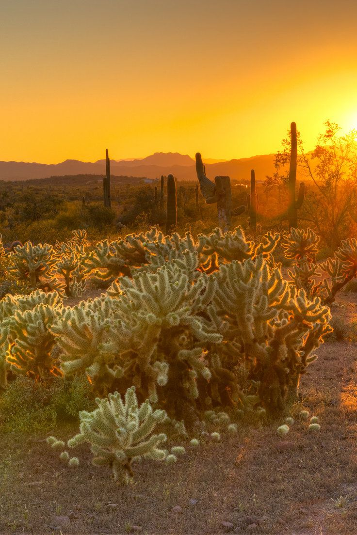 Your Ultimate Guide to Scottsdale, Arizona - Phoenix's charming little sister city is all grown up thanks to a host of retro-cool resorts, artisanal shops and mind-blowing eats. Here, the 13 things to do in Scottsdale.