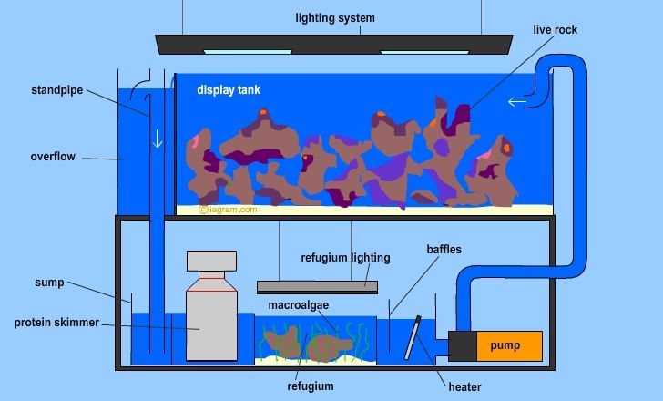 Here is a diagram of a modern reef aquarium with sump and refuge. Great for beginners so they can get an idea of what goes into putting a reef aquarium together. Enjoy! Read