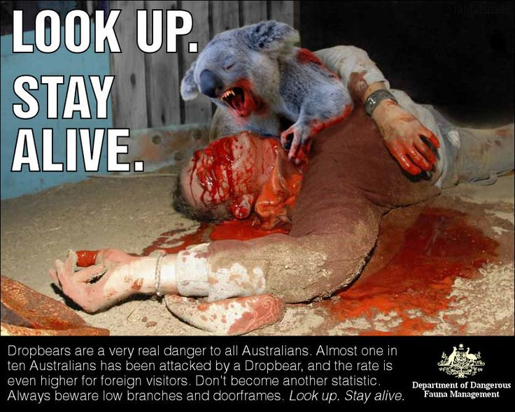 Drop Bears, they're not fucking around. Although I've never actually seen one and no one else I know has.....Gotta wonder.