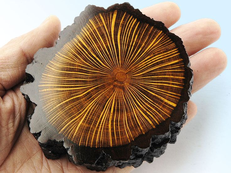 Polished wood disc