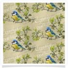 member's free blue tit backing paper pack cream