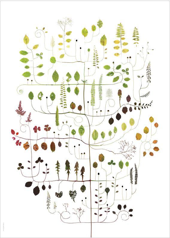 Beech Tree / Boken - Lottas Träd/ Lottas Trees