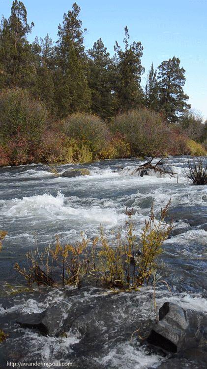 On The River arboles a la orilla del rio logran que parezca un lugar magico