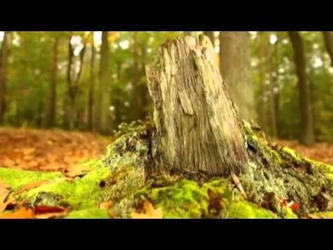 ''Música Con Energia Positiva Para Curar, Cuerpo y Alma'' - YouTube