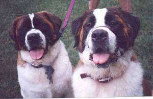 When i get my two St. Bernards, I'm going to name them Simon and Garfunkel :)