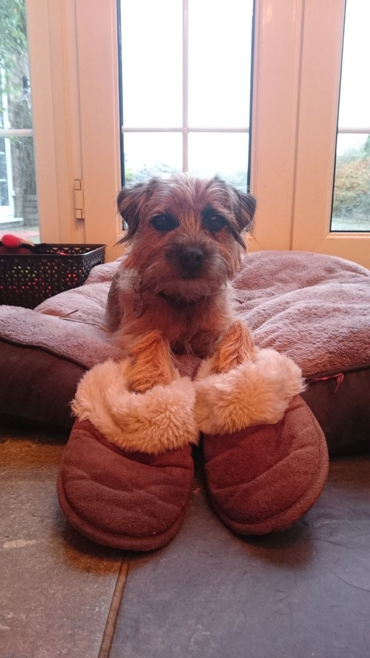 "BonnieBooBT on Twitter: ""Thank you for coming to stay with us. Don't worry Auntie Aimee I'm looking after the slippers you left!!😈 @AimeeHorton https://t.co/wrM1xHEBY5"""
