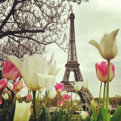 Paris tulips