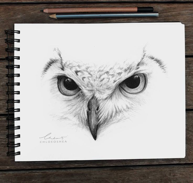 Thank you guys for all the positive feedback on my artwork! It's so inspiring ❤  I haven't been at my desk for a couple days because I've been on holiday. So this Owl drawing was done while I was on the plane ✈ [Drawn with Lead & black pencil]