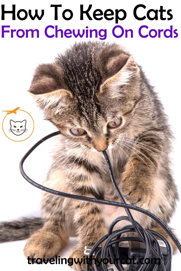 Learn About The Reasons Cats Chew On Cords And How To Stop Your Cats From Doing It Cats Cats Chewing Cords Keep Cats Away
