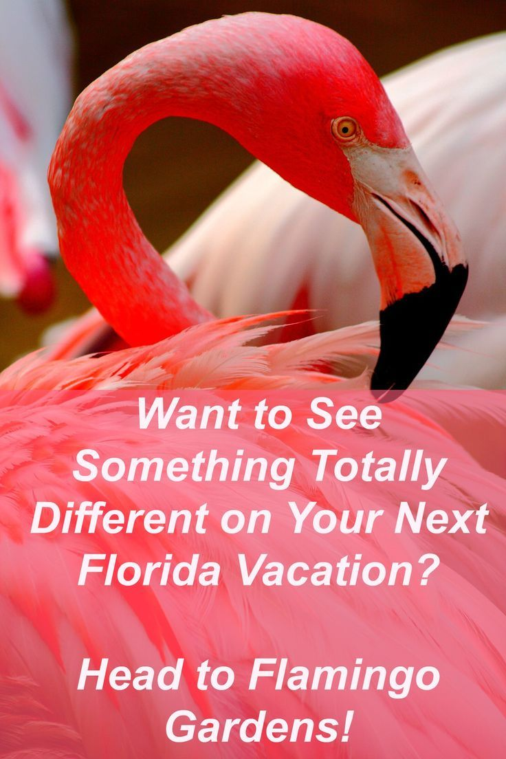 Tired of the usual Florida theme parks? Come see Flamingo Gardens, Florida for a…