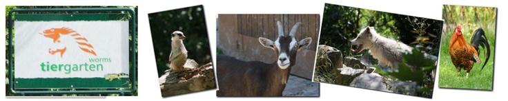 Tiergarten Worms, Erdmännchen, Wölfe, Ziegen