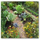 Practicando las rotaciones y asociaciones de cultivos en el huerto ecológico | #Huerto urbano - Huerto ecológico ecoagricultor.com
