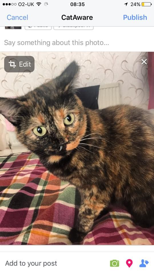 This is Polly, a 6 year old tortoiseshell cat who is missing. She went…