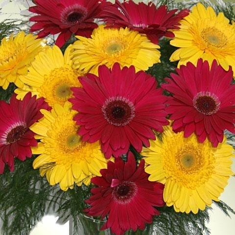 Detalle del ramo de gerberas rojas y amarillas con treffern https://www.maximaflores.com/ramo-gerberas-rojas-amarillas-treffern-p-74.html