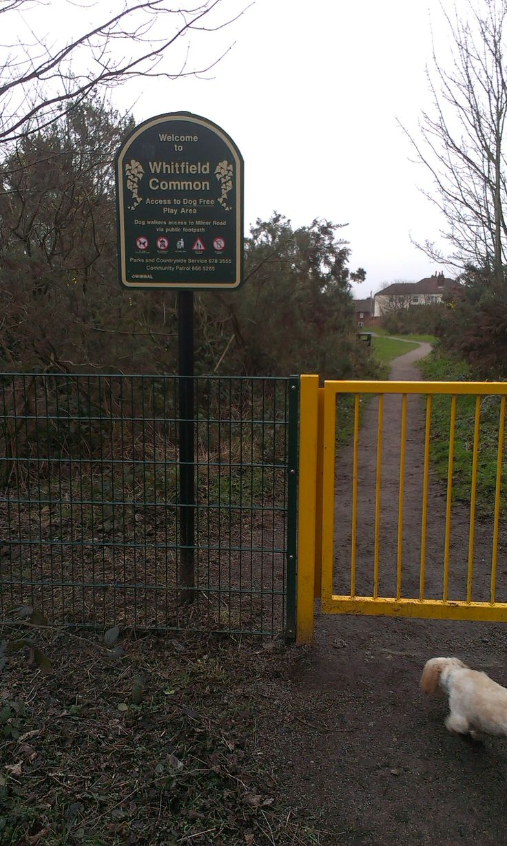 Whitfield Common Childrens Play Ground
