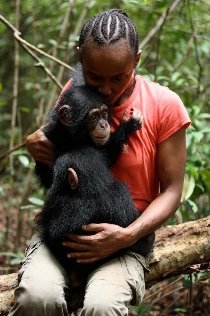 This Woman Has Been A Mom To Over 50 Orphaned Chimps