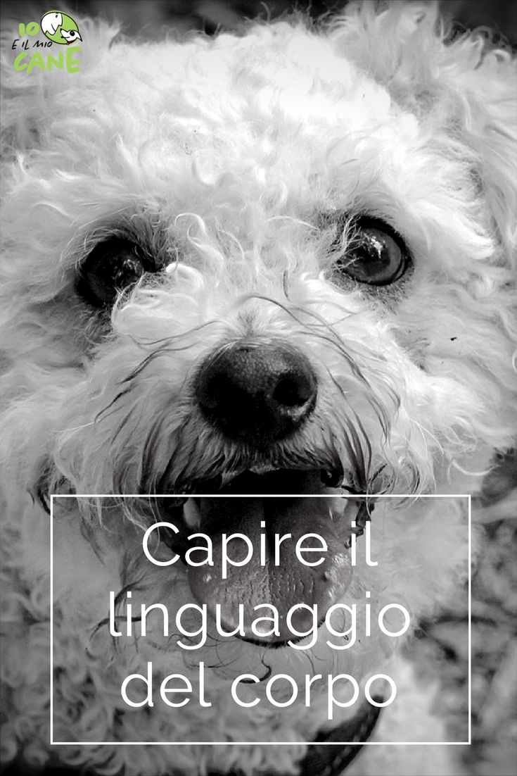 Come capire quello che dice il tuo cane dal suo linguaggio corporeo