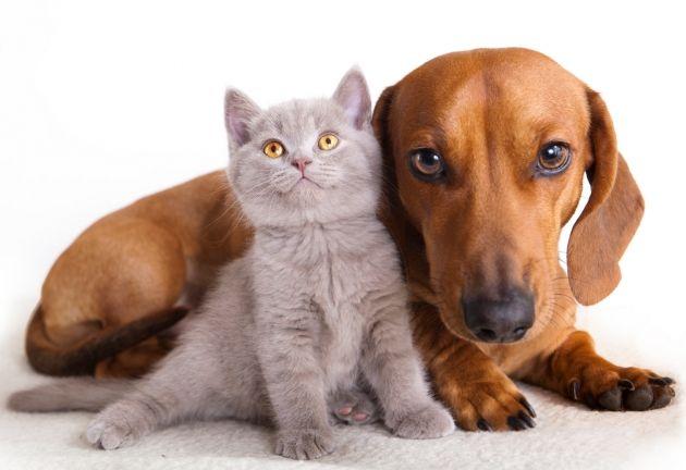 pensamientos frases bonitas para perros - Buscar con Google
