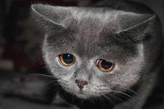 I think thist cat is sad.