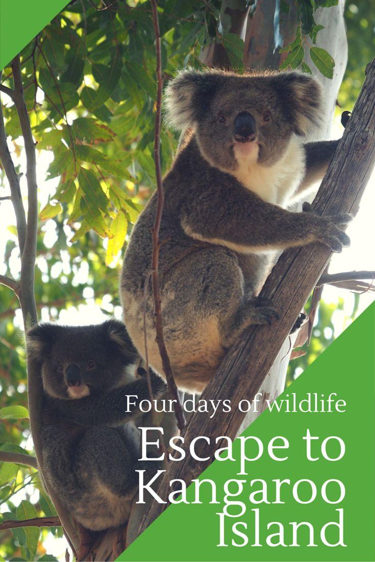 Four days of wildlife, an escape to Kangaroo Island, South Australia.