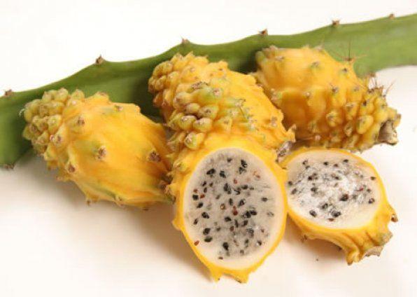 Yellow Dragon Fruit - Dragon Fruit