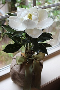 "Southern Magnolia Tree -   ""Seeds of life is a delightful farm that specializes in gift trees. They can be planted in honor of a special friend or family member. Trees symbolize strength and endurance and are the kind of gift that have potential to last centuries."""