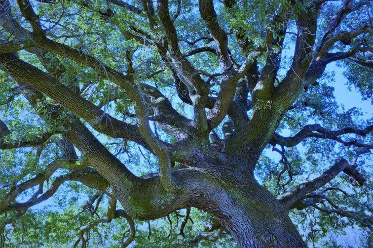 M  o   m   e   n   t   s   b   o   o   k   .   c   o   m: The power of ancient trees ...