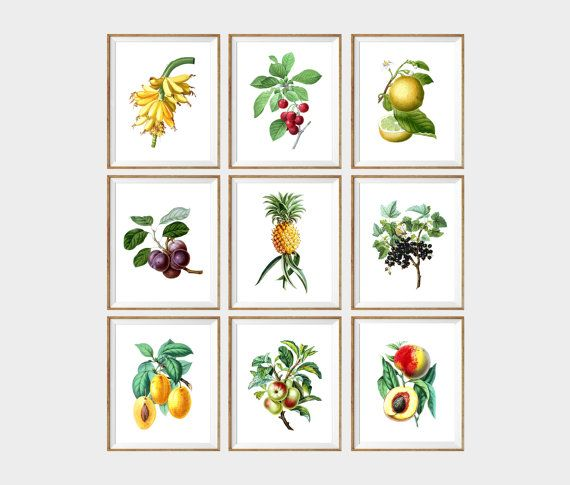 Botanical Kitchen Art Print SET. botanical by AntiqueWallDecor