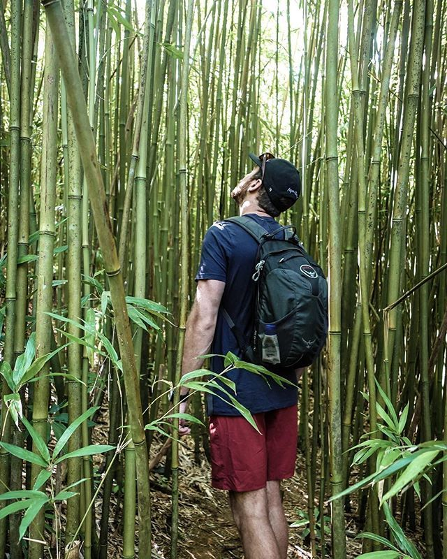 Maui, Hawaii   Getting lost in a bamboo forest 🎋#RoadToHana #Hawaii 🏝  wearejourneylists,forest,neverstroptraveling,hawaiitag,beautifuldestinations,livetheadventure,bamboo,ourlonelyplanet,neverstopexploring,ourplanetdaily,hawaii,ospreypacks,travel,voyage,hilife,nomadjunkies,l4l,traveleroftheweek,lethawaiihappen,island,quebec_travelers,roadtohana,quote,timeoutsociety,wanderlust,inspiration,nomademag,hiddenplace,teamgetlost